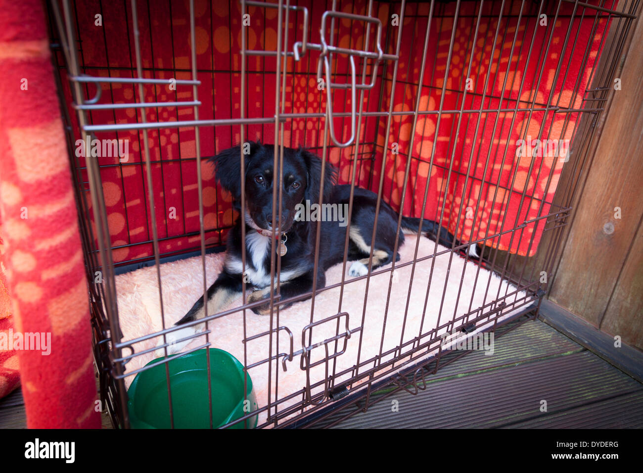Puppy inside blanket covered closed dog cage with water bowl. - Stock Image