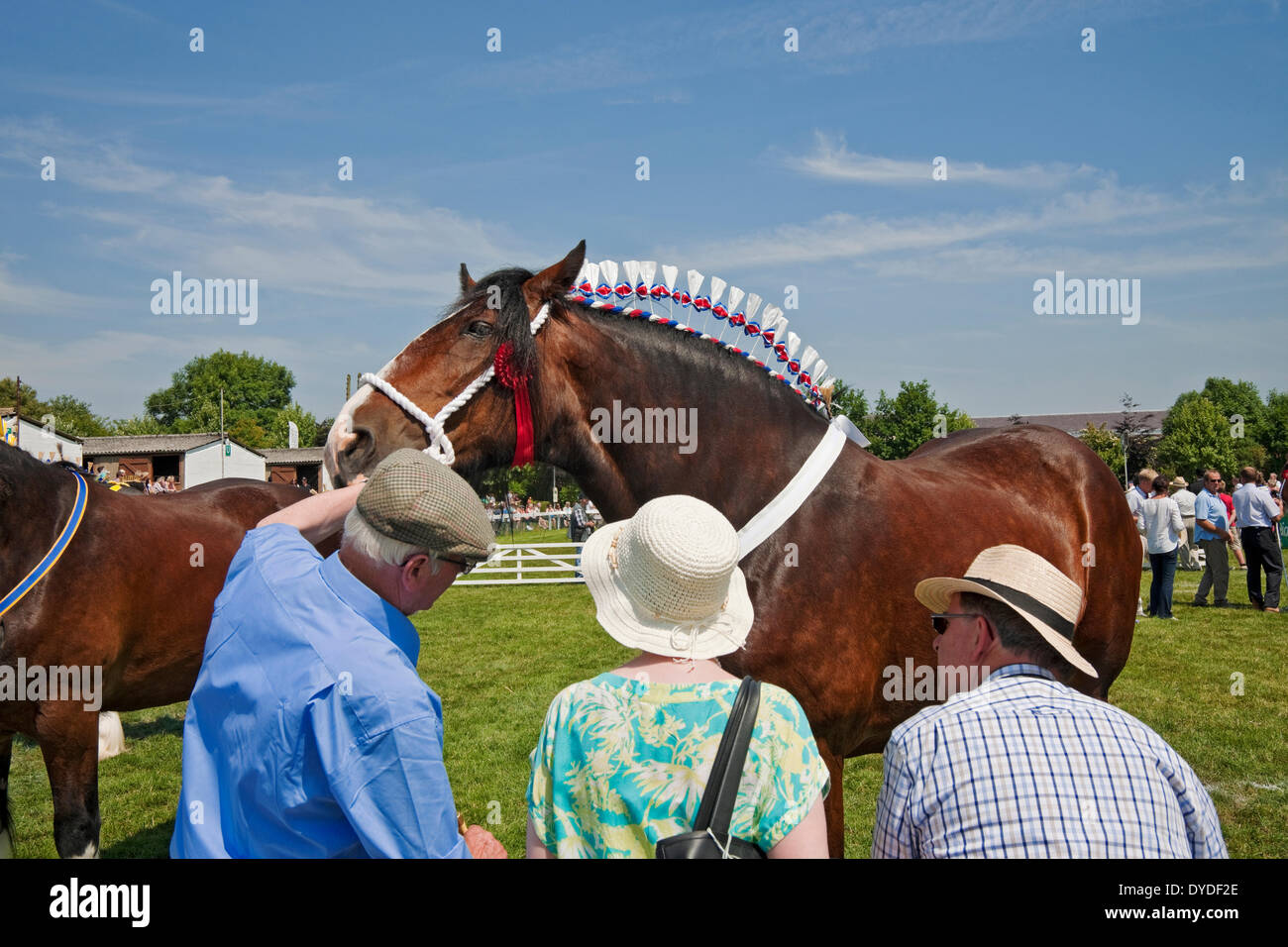 Shire horses at the Great Yorkshire Show. - Stock Image