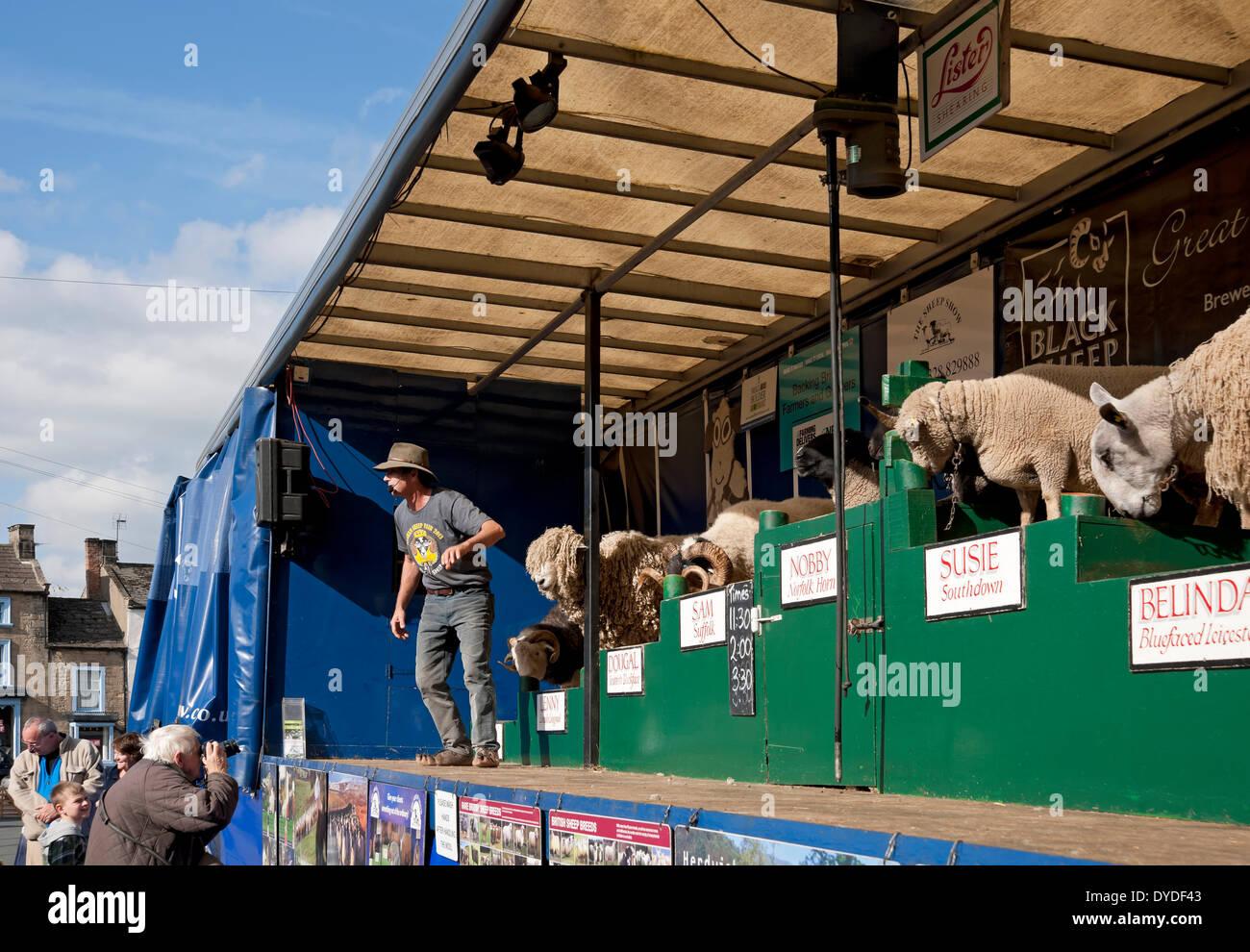 Man giving talk on various breeds of sheep at Masham Sheep Fair. - Stock Image