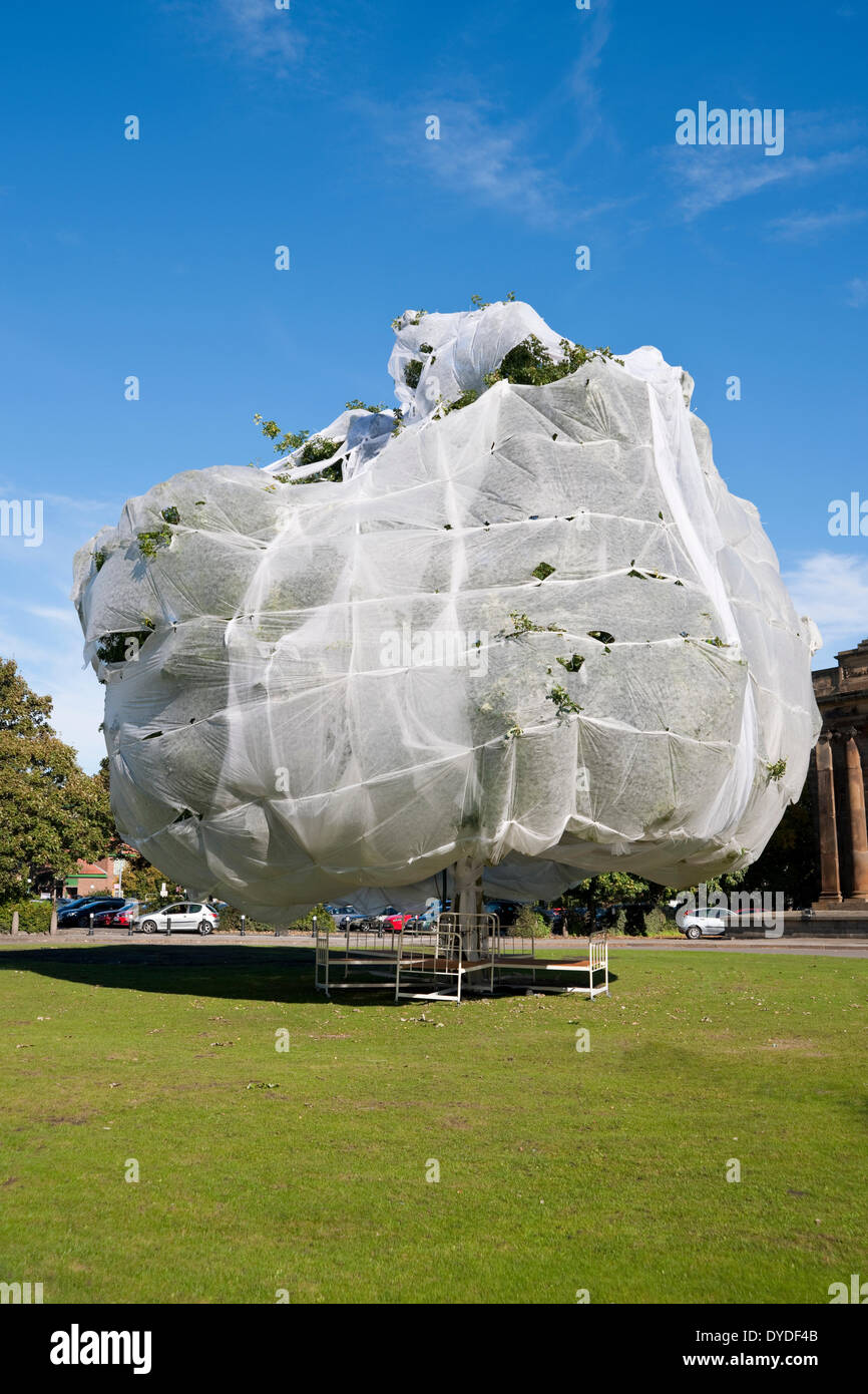 Large tree covered in horticultural fleece to protect it. Stock Photo
