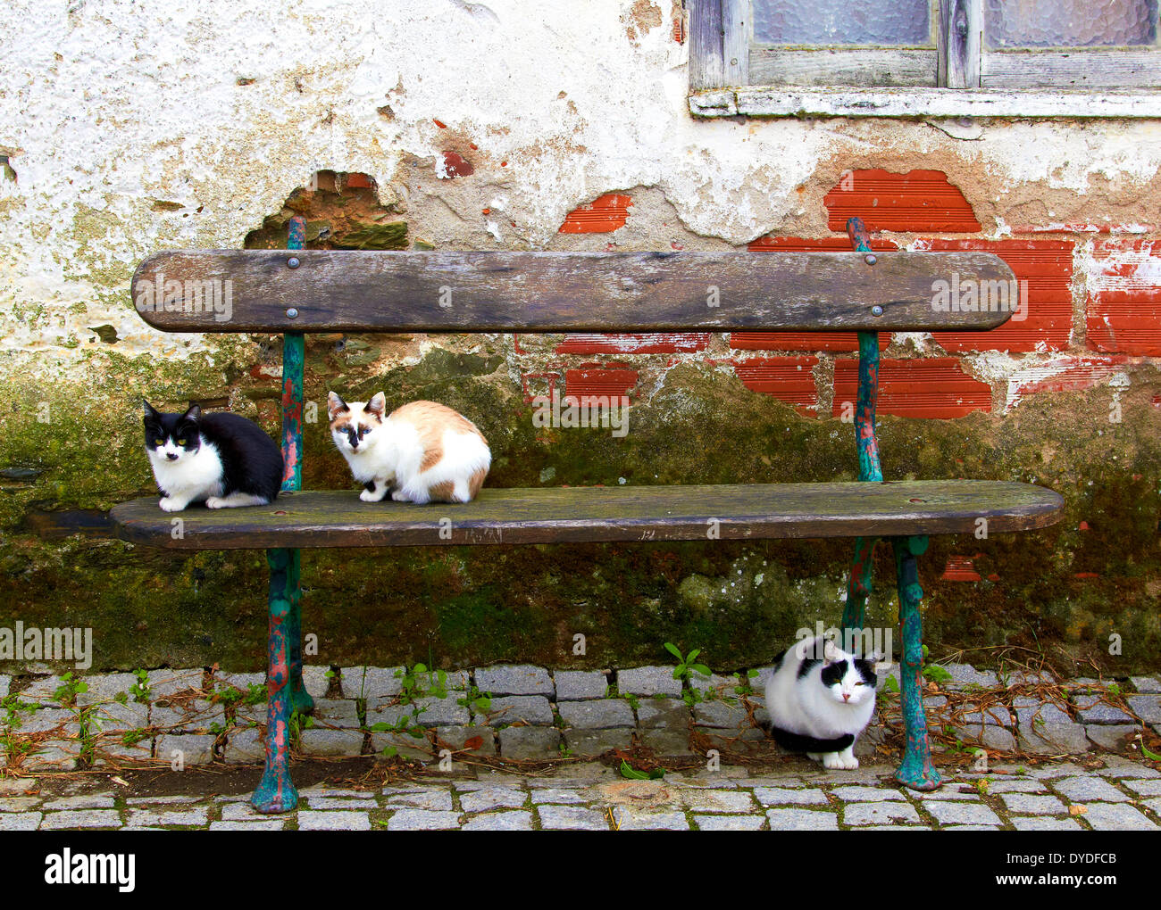 Three cats obligingly posed for the camera in a quite alleyway in a remote part of Northern Portugal. - Stock Image