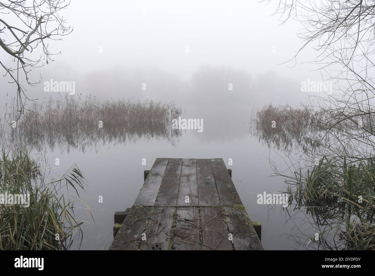 A wooden jetty on the Unversity of East Anglia broad on a misty morning. - Stock Image