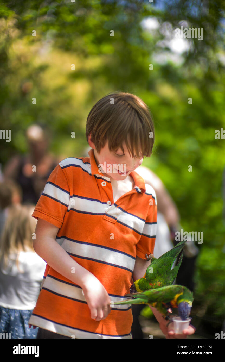 Feeding parrots at the zoo. - Stock Image