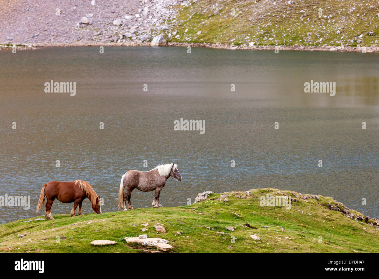Horses grazing on the shore Ibon de Asnos in the Sierra de TendeÕ±era in the Pyrenees. - Stock Image