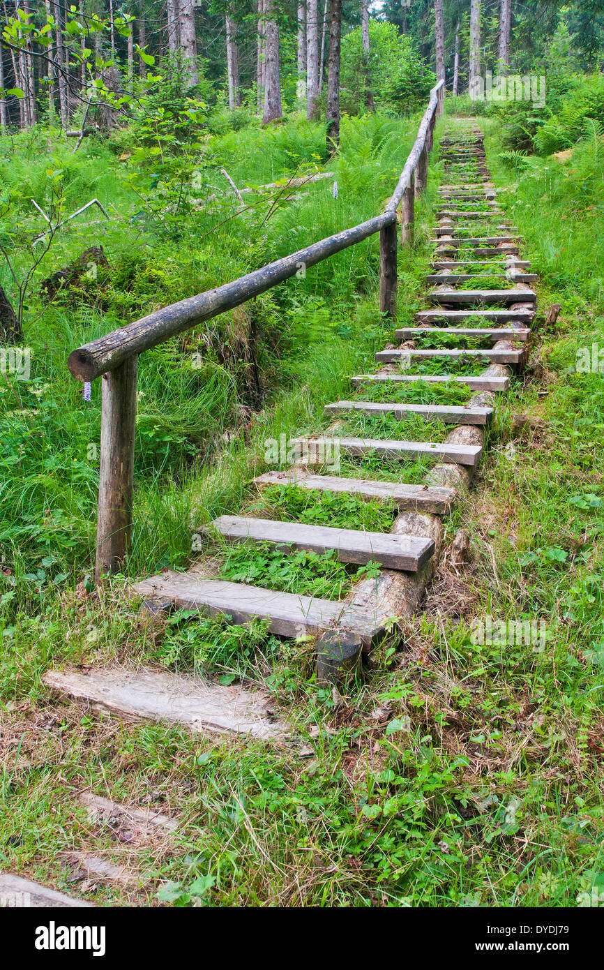 Bavaria, Germany, Europe, Anger, way, ways, footpath, step, steps, wooden steps, railings, wooden railings, stair, - Stock Image