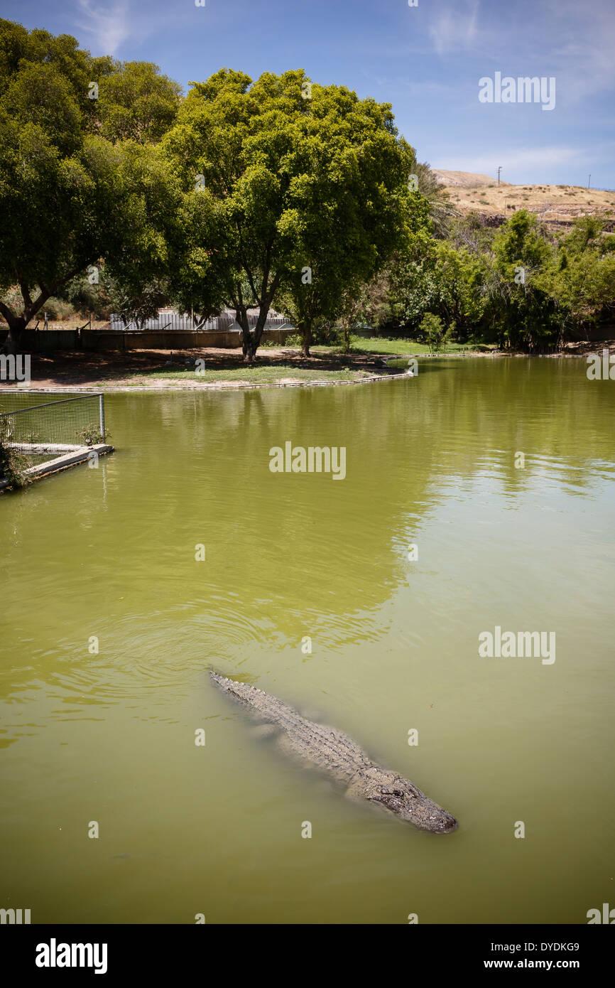 The crocodile farm at Hamat Gader, Golan Heights, Israel. - Stock Image