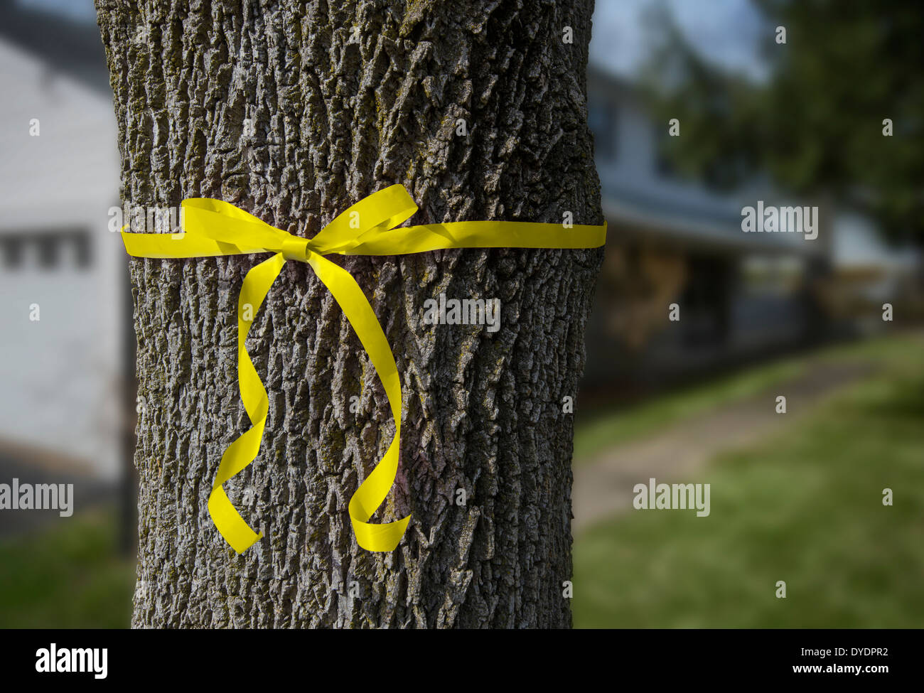 Yellow Ribbon Tied around Tree In Front Yard Of Home - Stock Image