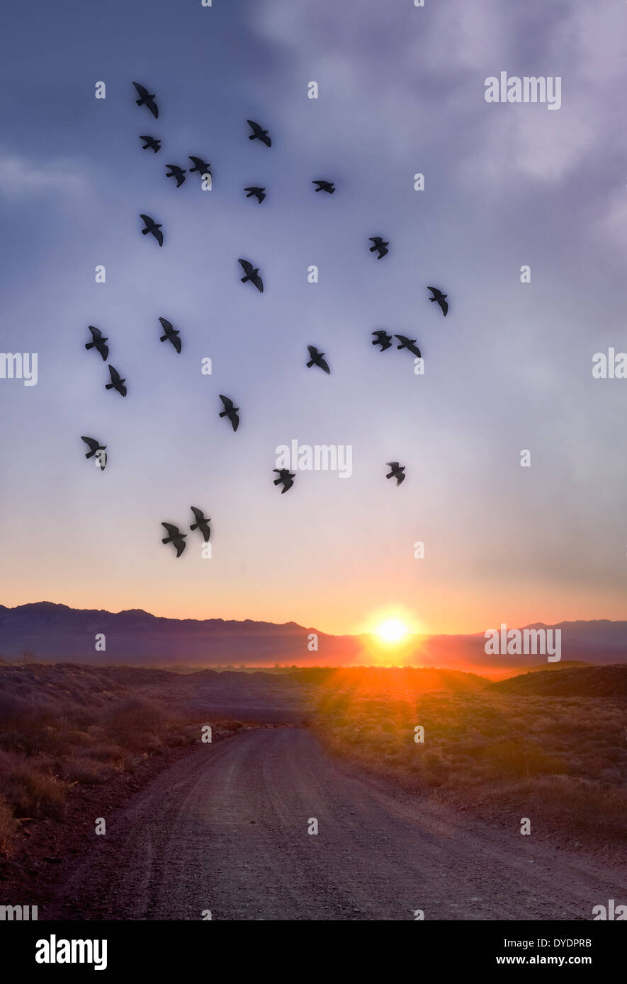 Flock Of Birds Flying Over Desert Sunrise & Dirt Road, Nevada USA - Stock Image