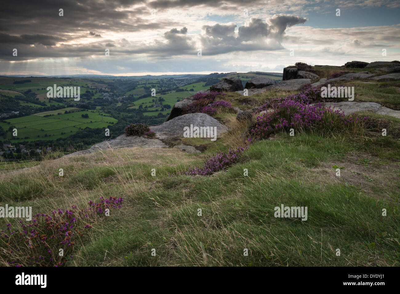 Stormy skies over the Derwent valley viewed from Curbar Edge beside flowering heather, Peak District National Park, Derbyshire, England - Stock Image