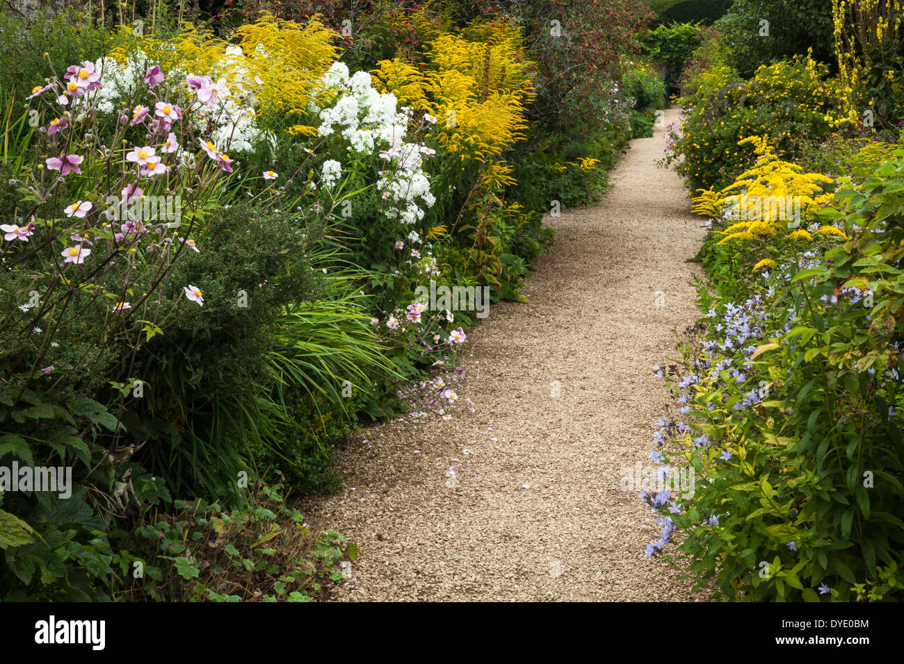 A garden path in early September lined by herbaceous borders with late summer flowering plants, Rousham House, Oxfordshire, England - Stock Image