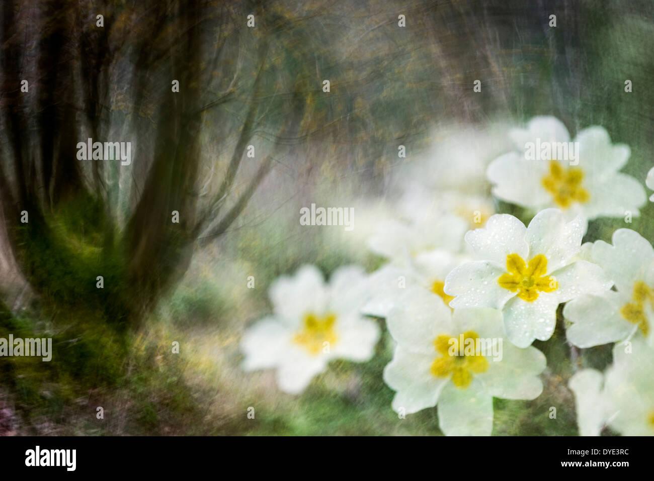 Spring woodland Stock Photo