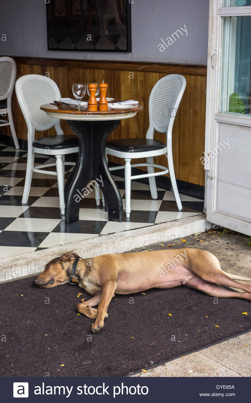 Dog sleeping on sidewalk in front of restaurant on Front Street in Lahaina on the island of Maui in the State of Hawaii USA - Stock Image