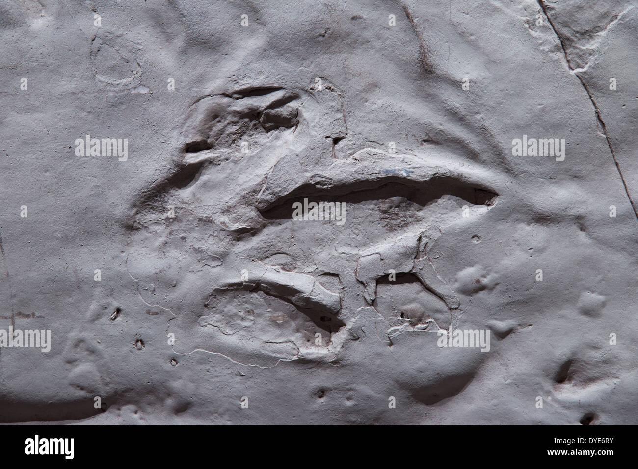 Dinosaur footprint left in a mud-rock. - Stock Image