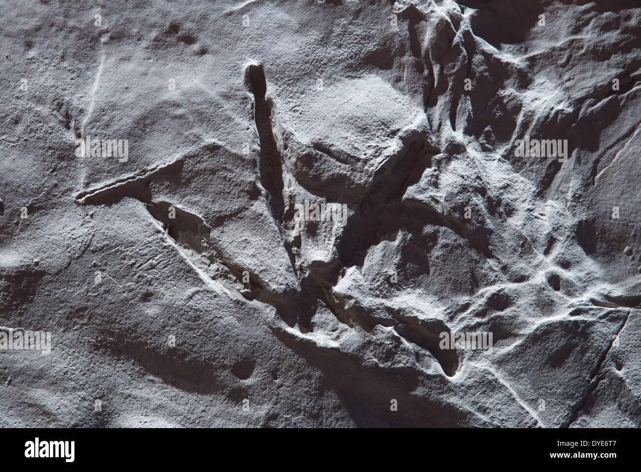 A bird-like three-toed dinosaur footprint left in a mud-rock. - Stock Image