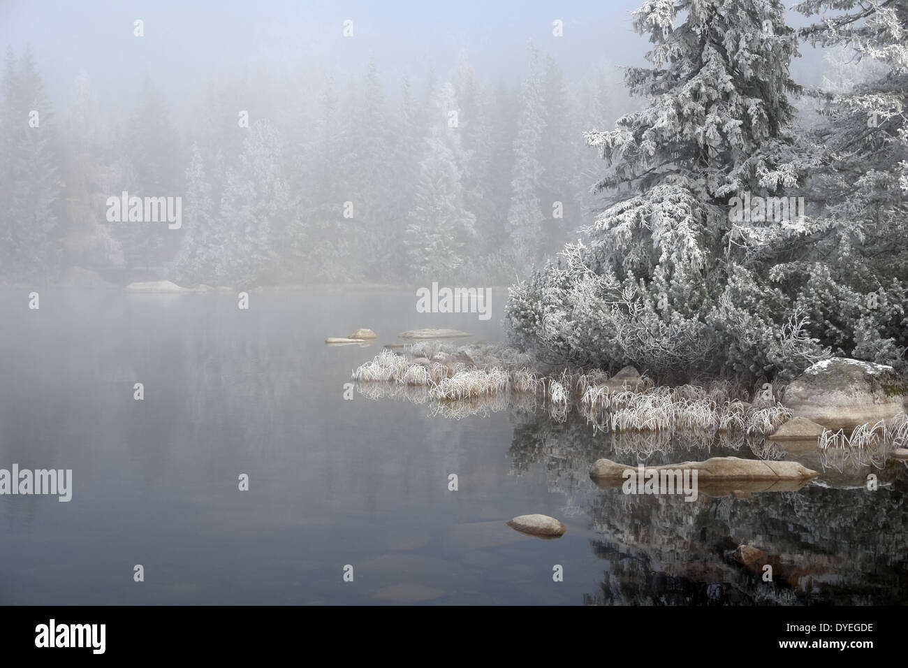 Landscape with trees,waters and fogs on the Strbske Pleso,Slovakia - Stock Image