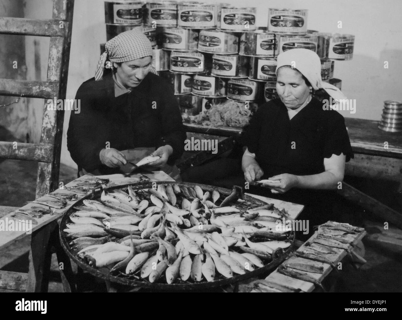 Greek fishing was revived under the Marshall plan in 1950. - Stock Image