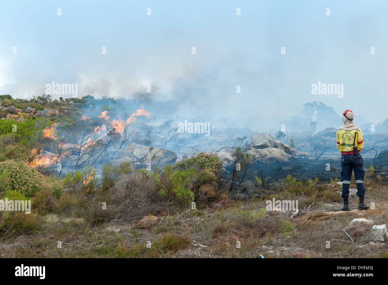 Firefighter exercises controlled burning of vegetation to stimulate new growth, Cape Peninsula, Western Cape, South - Stock Image