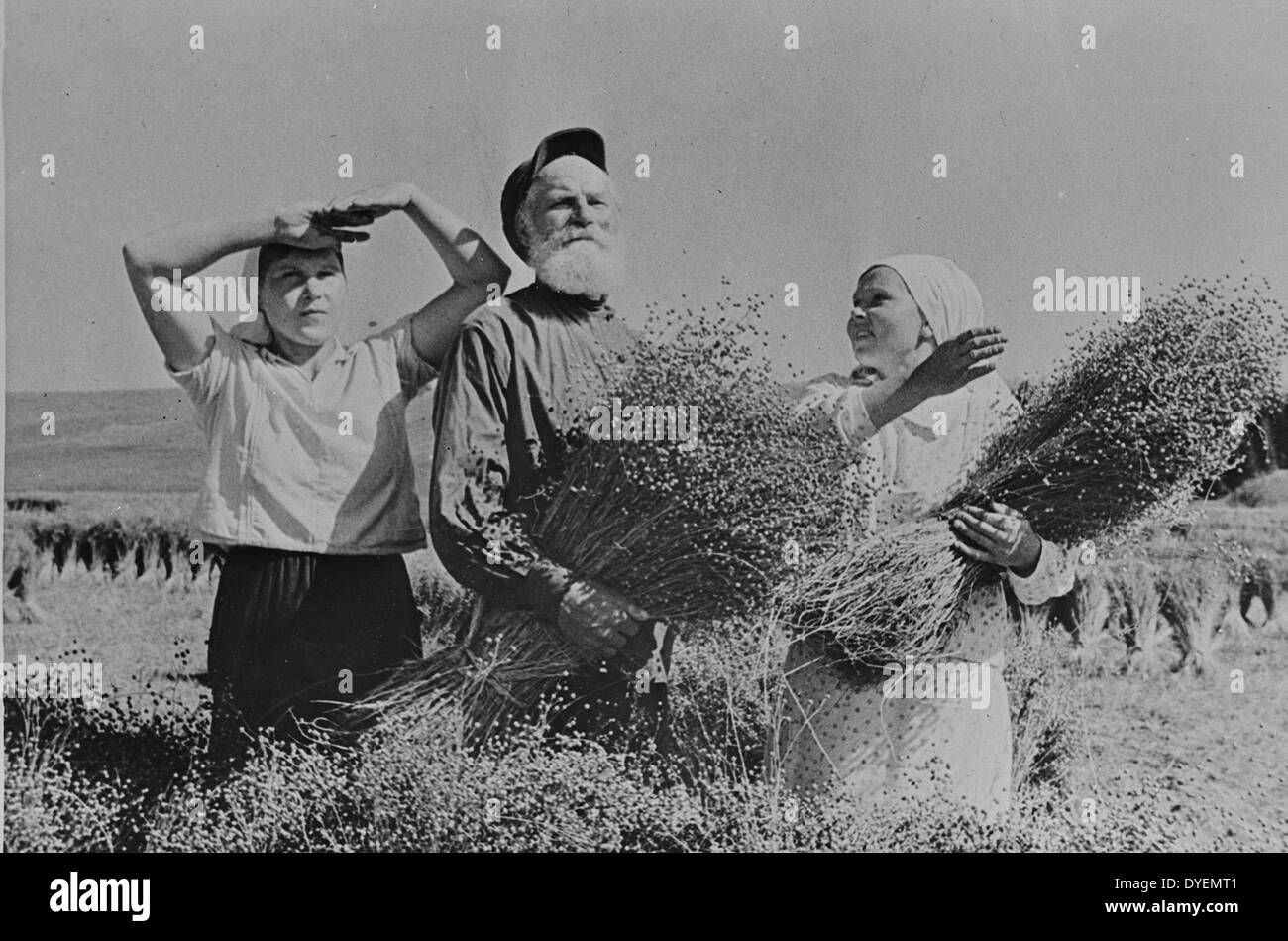 Flax-pickers during the harvest on a collective in the Mari autonomous republic, USSR - Stock Image