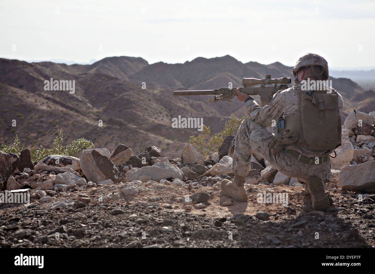 A US Marine Corps scout sniper during a fire and maneuver drill with an M110 semi-auto sniper system during Talon Exercise March 29, 2014 in Yuma, Arizona. - Stock Image
