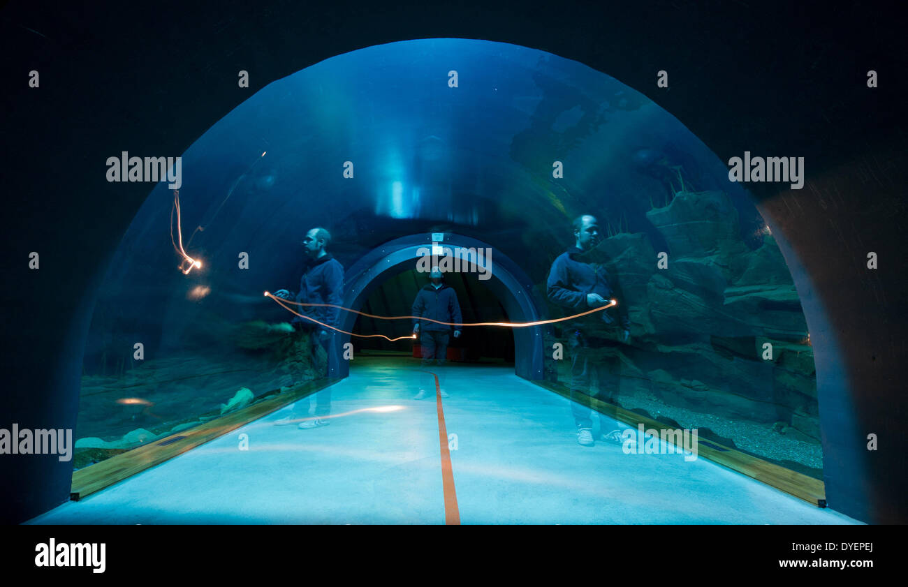 ILLUSTRATION - The director of the 'Ozeaneum' public aquarium, Alexander von den Dreisch, shines with his pocket lamp as he walks through the underwater tunnel in front of the entrance area to the qauarium in Stralsund, germany, 10 March 2014. Photo: Stefan Sauer - Stock Image