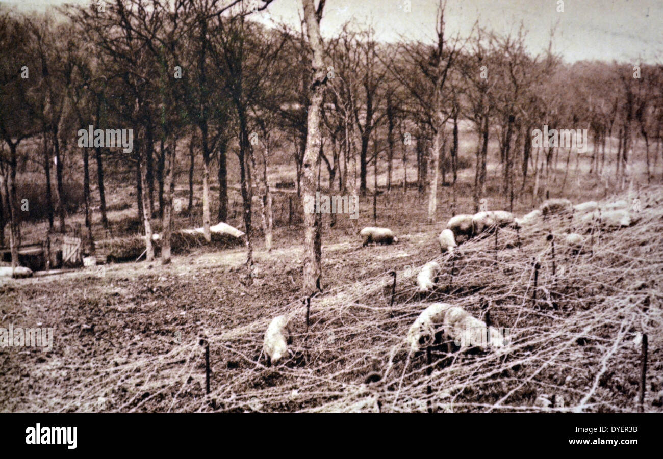 World War Two: French army barbed wire (chevaux de frise) fences  at a front line position 1940 - Stock Image