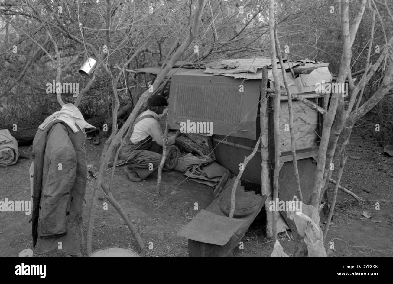 White migrant worker living in camp with two other men, working on lean-to which is to be his sleeping quarters. Dated 1939 - Stock Image