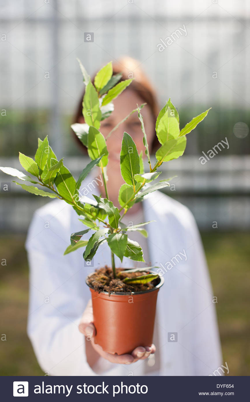 Scientists examining potted plant outdoors - Stock Image