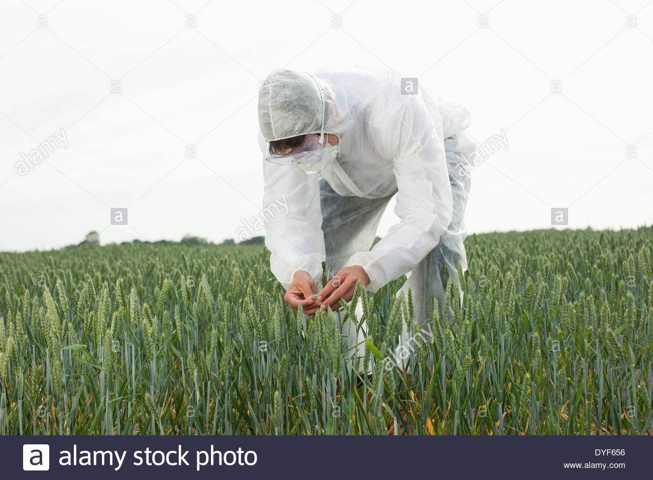 Scientist in protective gear examining plants - Stock Image