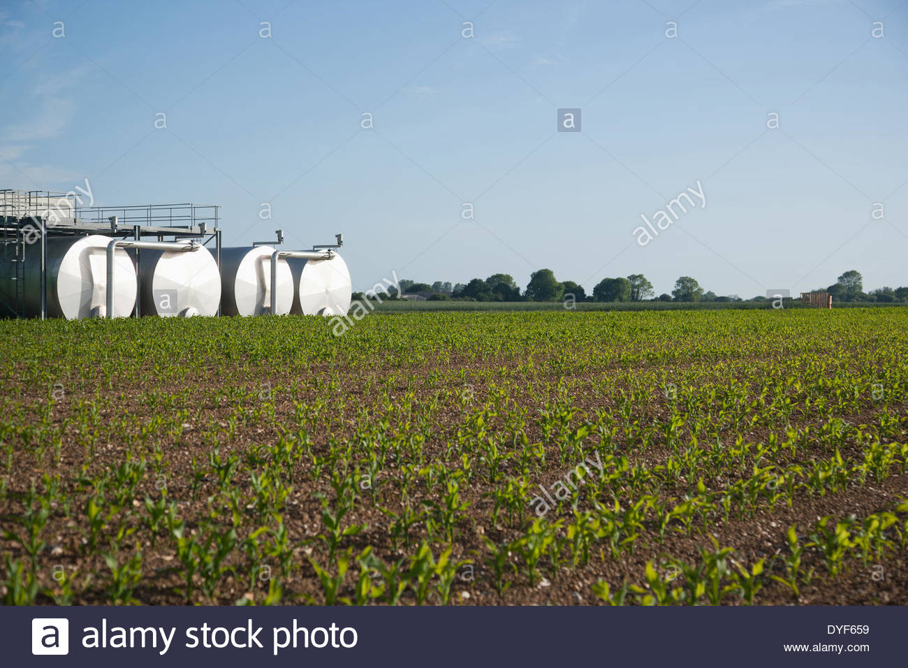 Tanks by field under blue sky - Stock Image