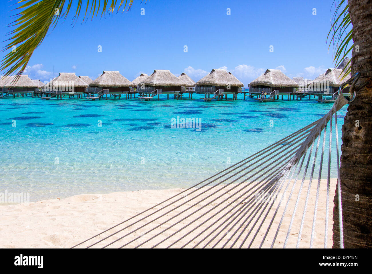 Rope hammock attached to palm tree on a beach with overwater bungalows by the turquoise waters of Moorea in French Polynesia - Stock Image