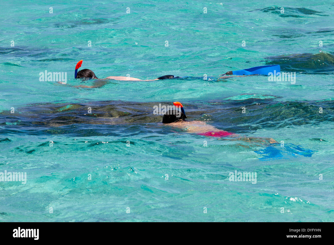 Newlywed couple snorkeling in turquoise waters of French Polynesia while on vacation - Stock Image