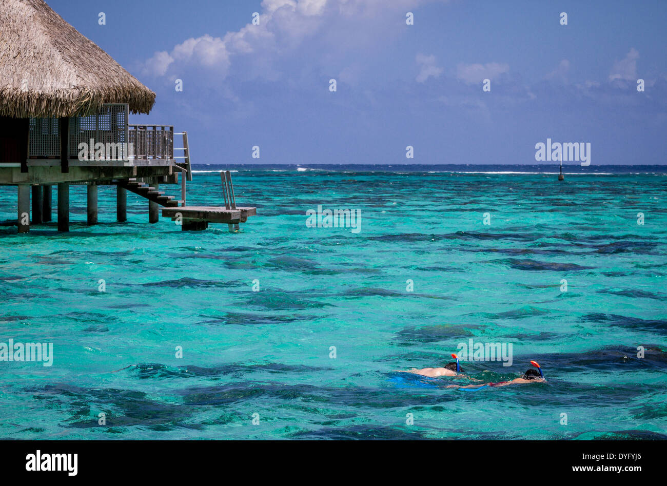 Newlywed couple snorkeling by thatched roof overwater bungalows on vacation in French Polynesia - Stock Image