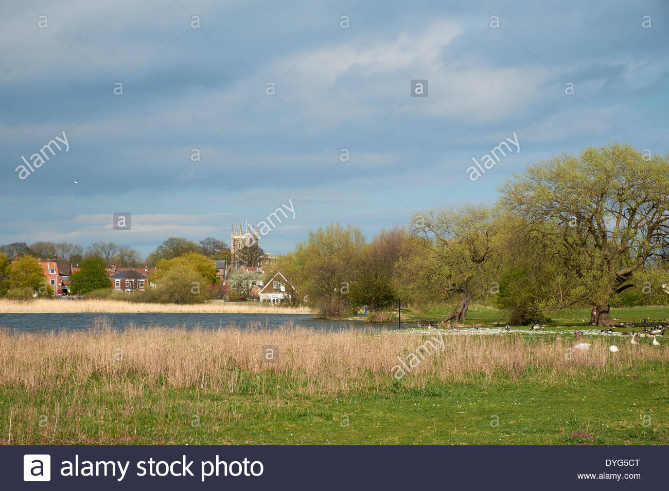 Hornsea Mere, largest natural freshwater lake in Yorkshire looking towards the town and Saint Nicholas church tower. Hornsea - Stock Image