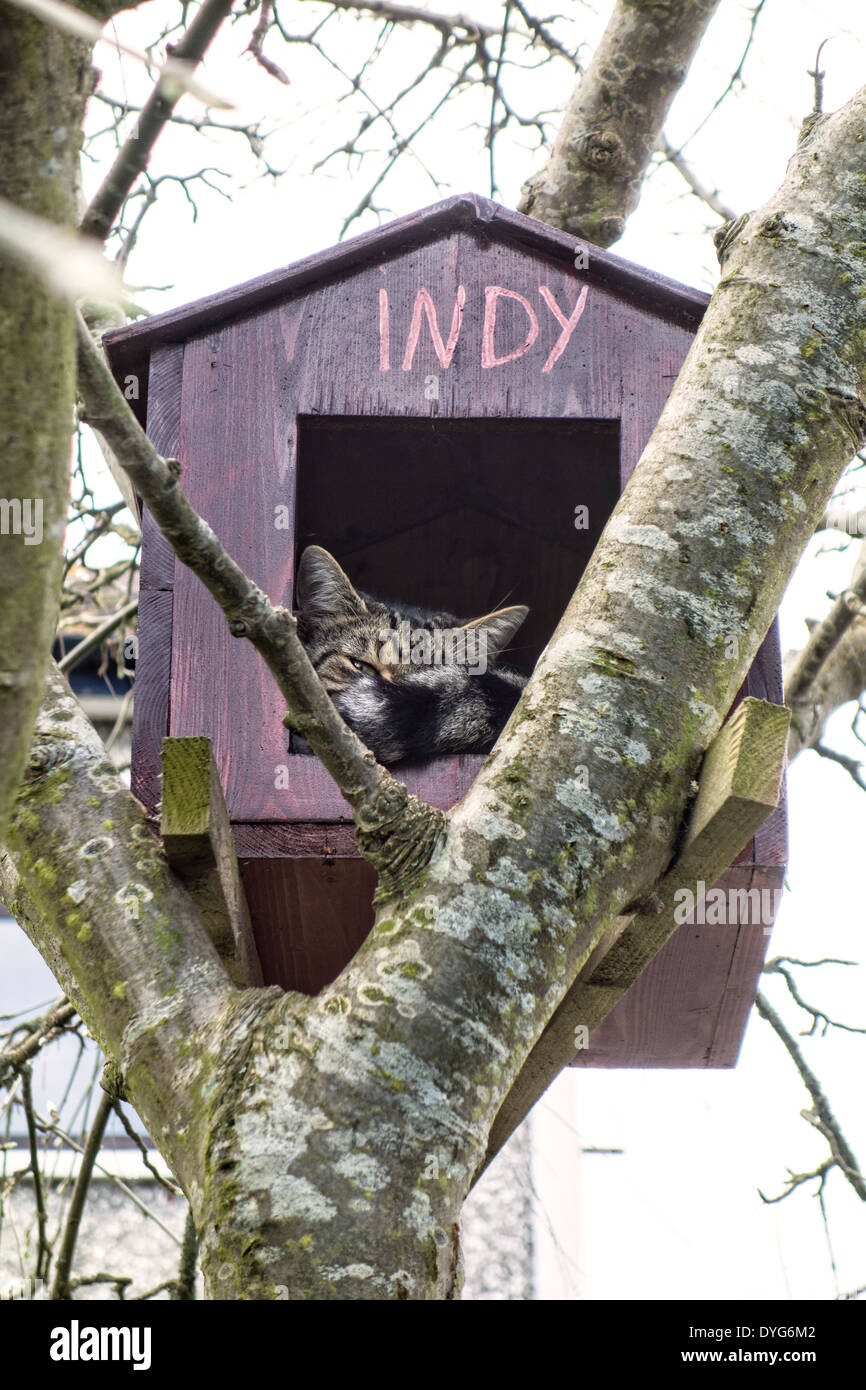 Cat in its own tree house - Stock Image