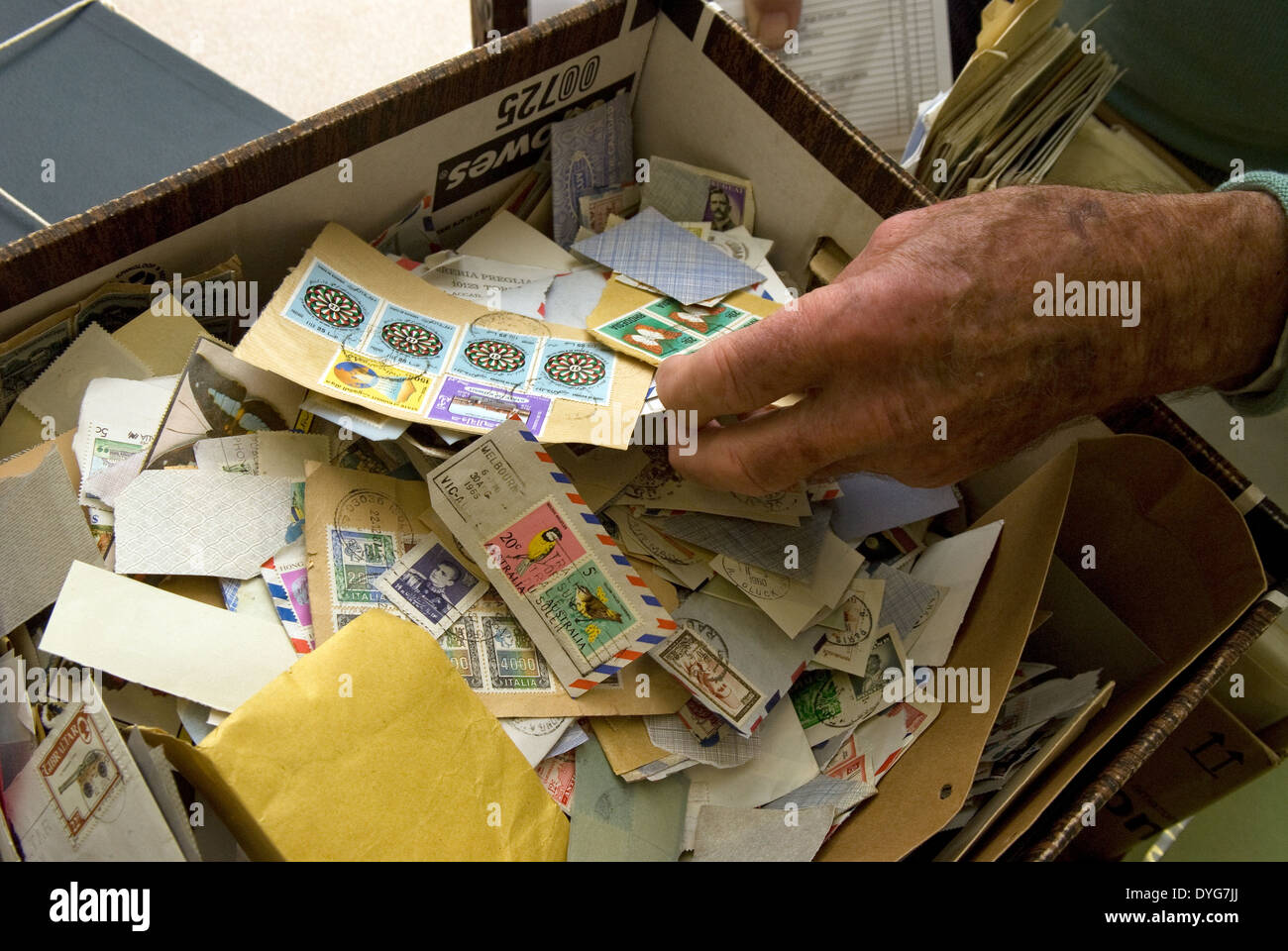 Attendee at a stamp auction leafing through a box of assorted stamps, Petersfield, Hampshire, UK. - Stock Image