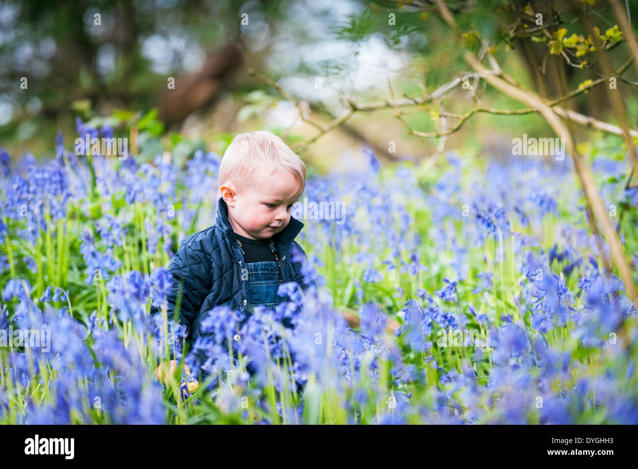 Coombe Wood, Essex, UK. April 17th 2014.   Young Chester Scammell-Webb takes the opportunity to sit amongst a spectacular display of bluebells.  It is the first time he has ever seen so many bluebells.  Photographer:  Gordon Scammell/Alamy Live News. - Stock Image