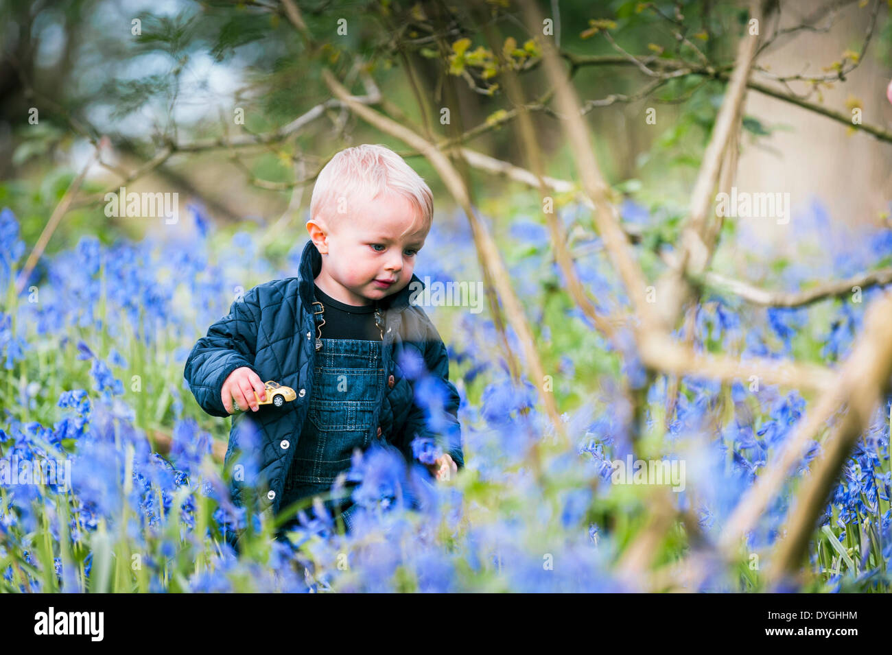 Coombe Wood, Essex, UK. April 17th 2014.   Young Chester Scammell-Webb takes the opportunity to have a closer look at a spectacular display of bluebells.  It is the first time he has ever seen so many bluebells.  Photographer:  Gordon Scammell/Alamy Live News. - Stock Image