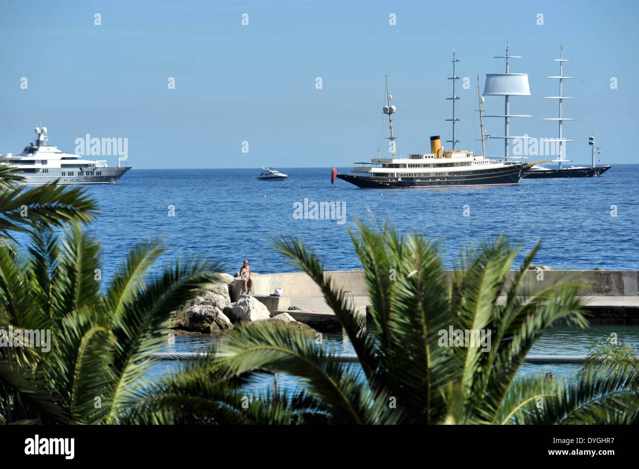 Palm trees line the Monaco shore line, luxury yachts are anchored close by. - Stock Image