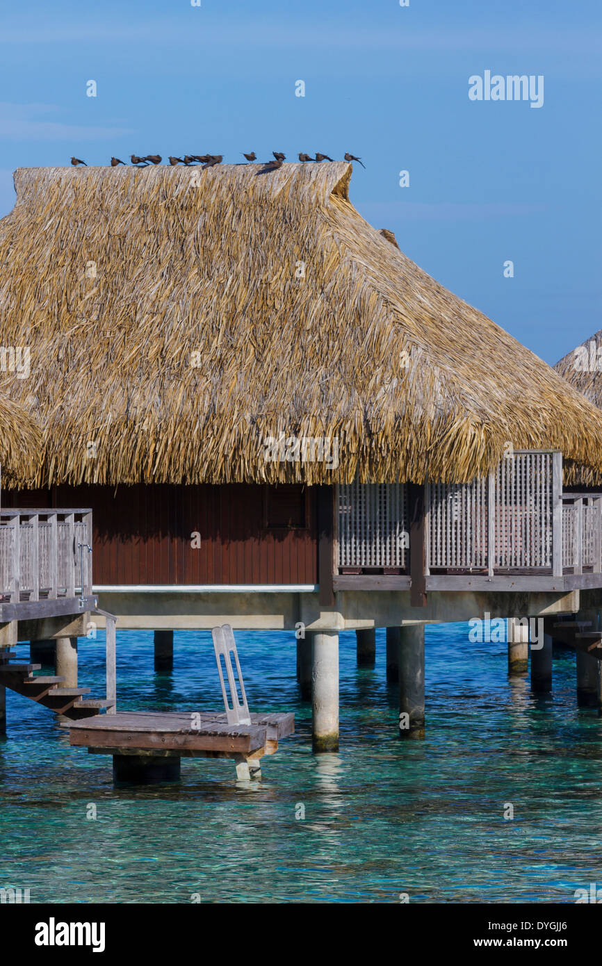 Birds perched on top of thatched roof of overwater bungalow in French Polynesia - Stock Image