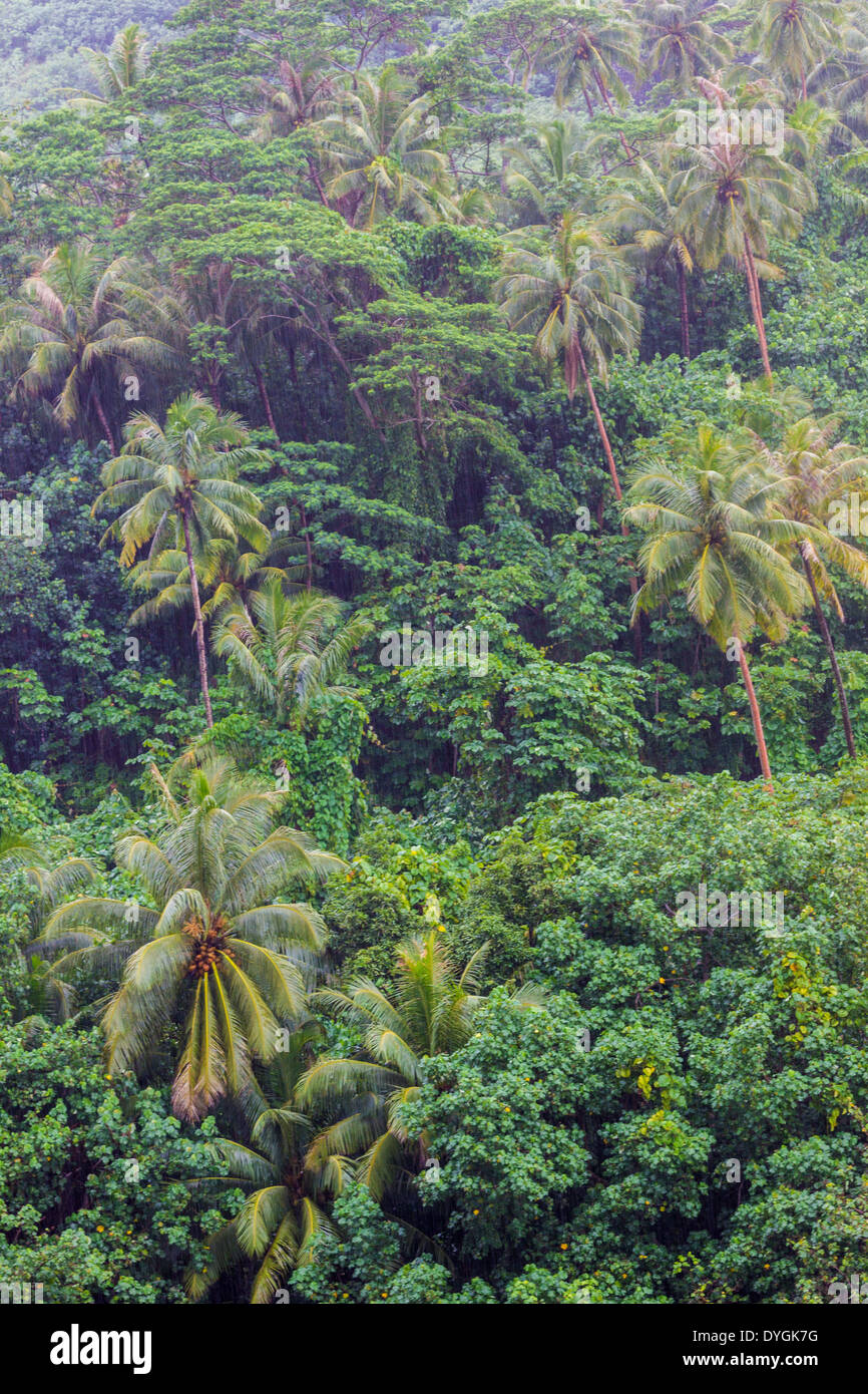 Rain falling on lush hillside with palm trees and other tropical trees in French Polynesia - Stock Image