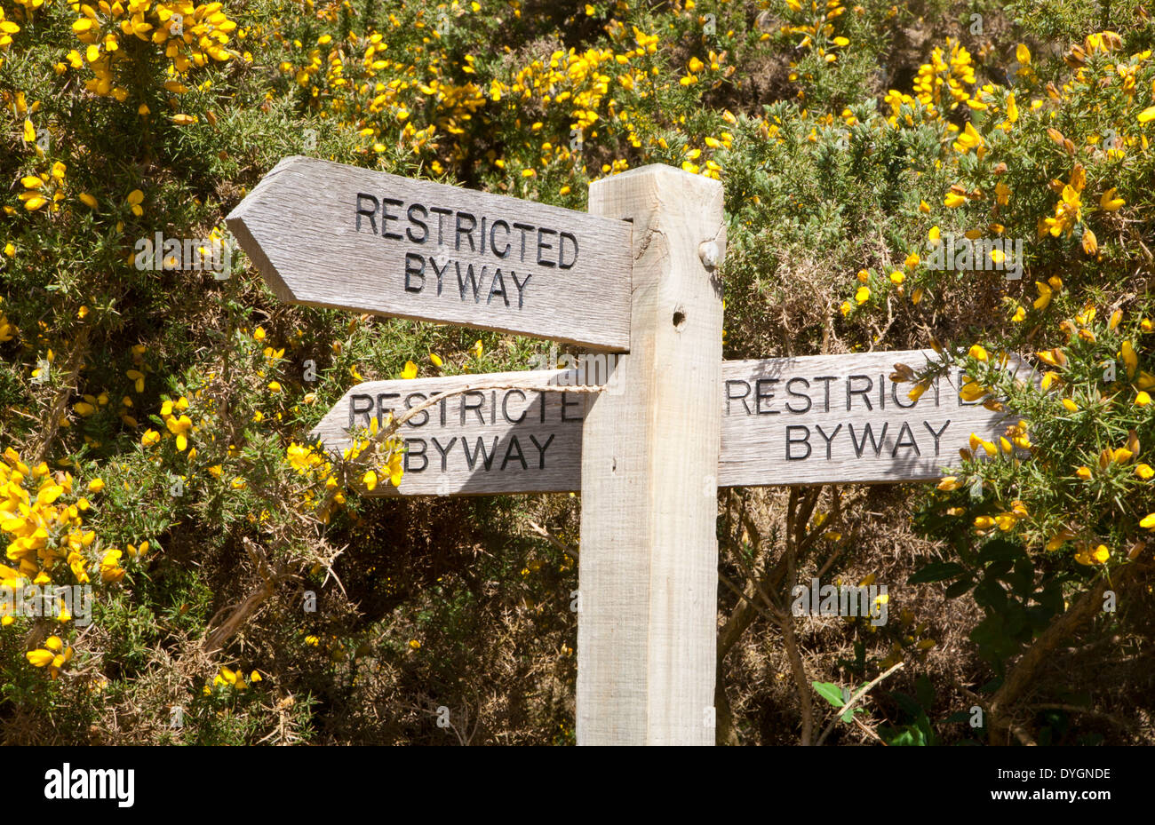Wooden signpost for three restricted byway paths next to yellow flowers of common gorse bush, Shottisham, Suffolk, England - Stock Image