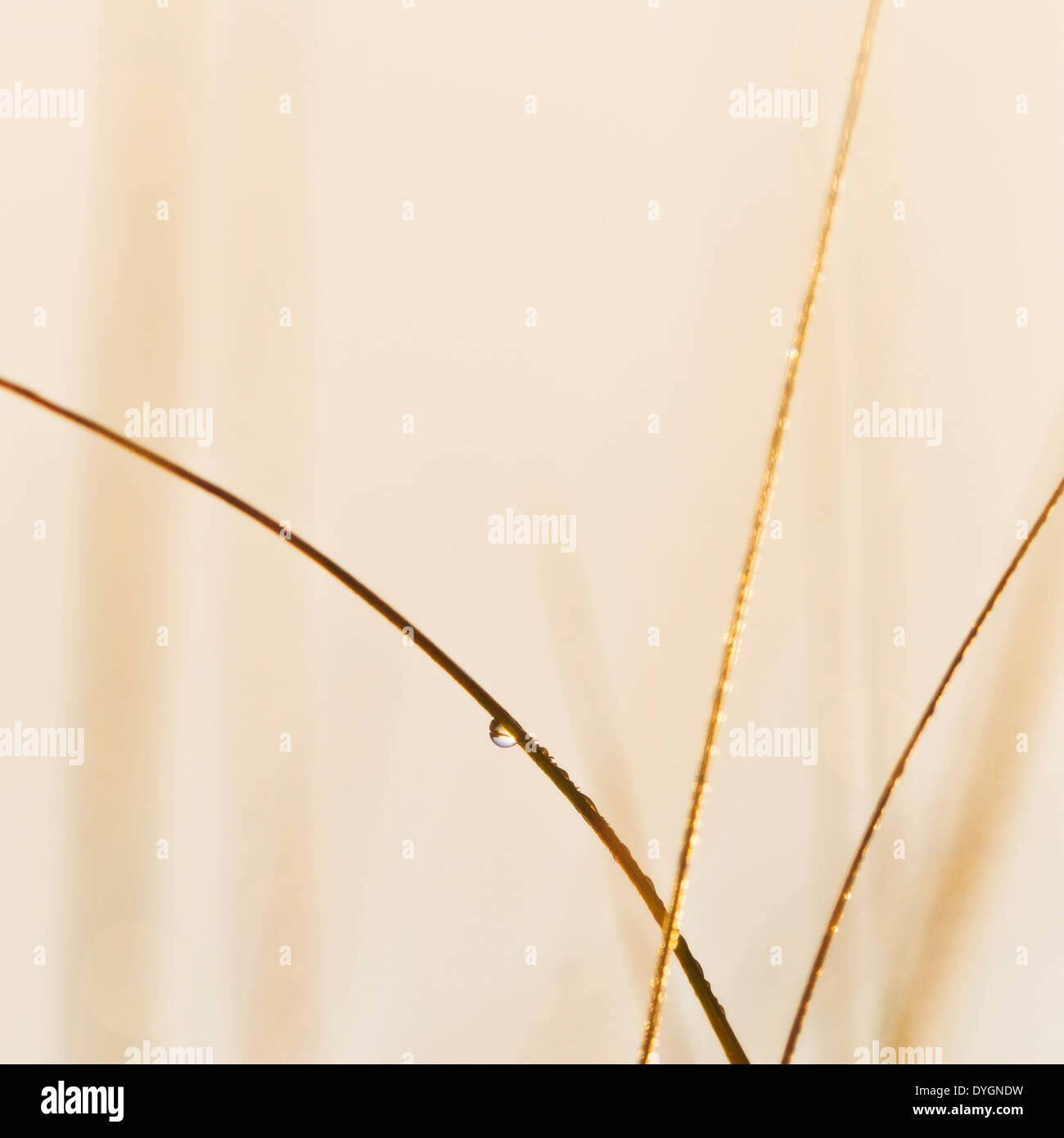Close-up of blade of grass, Hunneberg, Vastra Gotaland County, Sweden - Stock Image