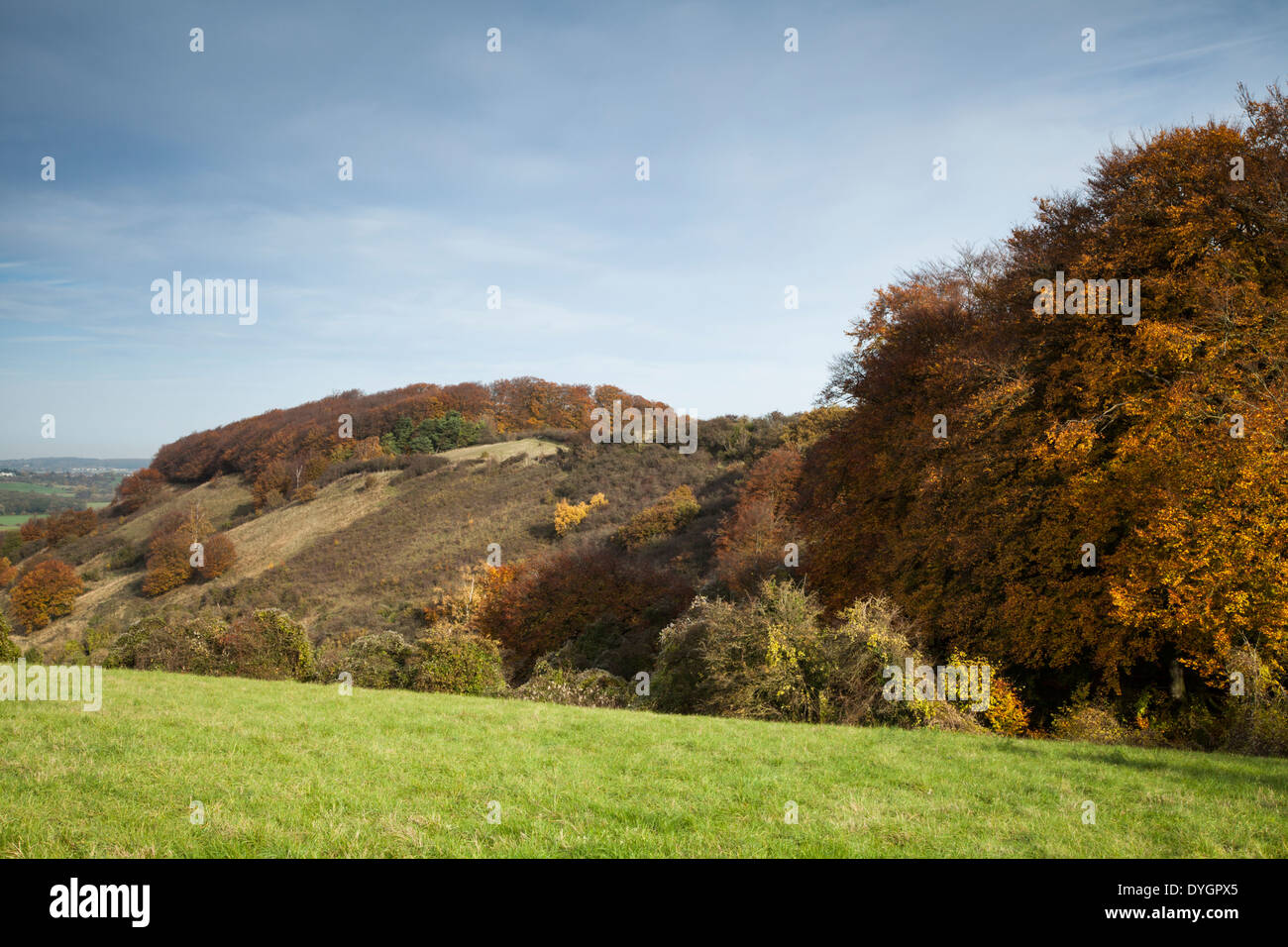 The long chalkland escarpment of Sharpenhoe Clappers in autumn, Chiltern Hills, Bedfordshire, England - Stock Image