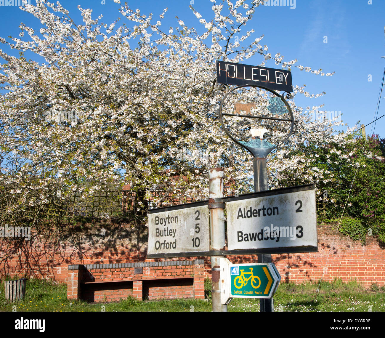 Spring blossom on trees and road sign in the village of Hollesley, Suffolk, England - Stock Image