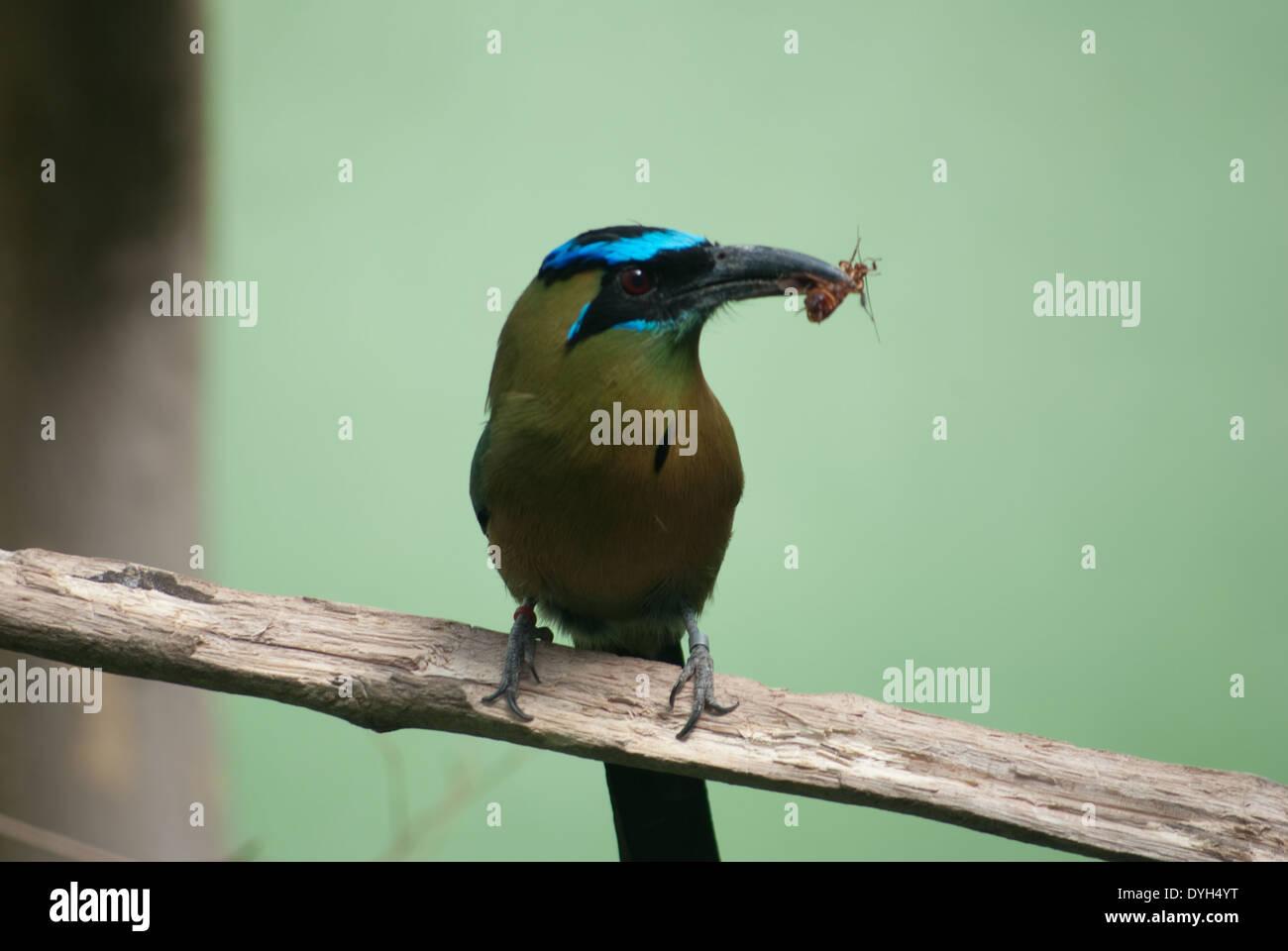 Vogel - Stock Image