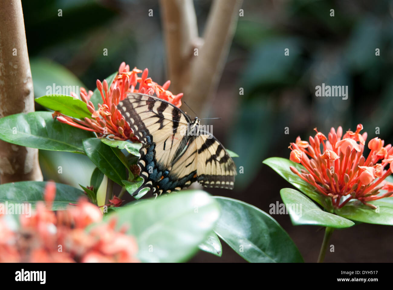 Schmetterling, - Stock Image