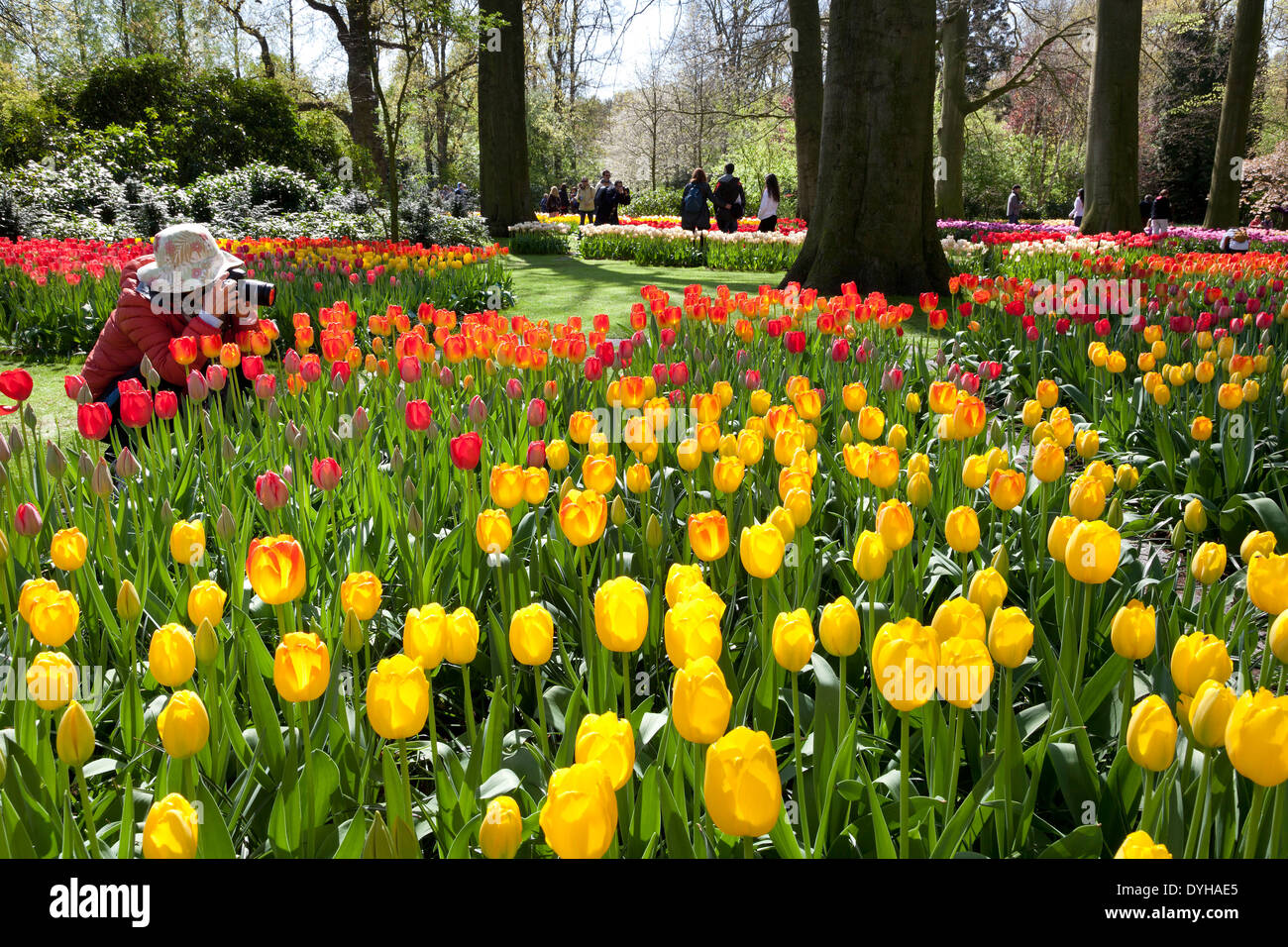 Tulips and tourists in the Keukenhof in Lisse, Holland - Stock Image