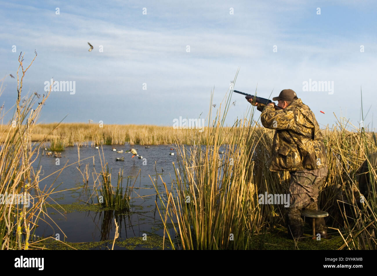 Duck Hunter Shooting from Blind at Jacana Lodge in the Rio Negro Province of Argentina - Stock Image