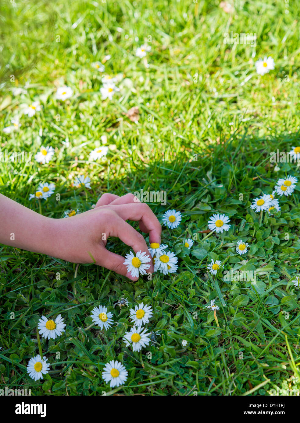 Human Hand, Flower, Single Flower, Recovery, Inside Of, Sharing, Alternative Medicine, Holding, Daisy, Spirituality, Care, Gift, - Stock Image