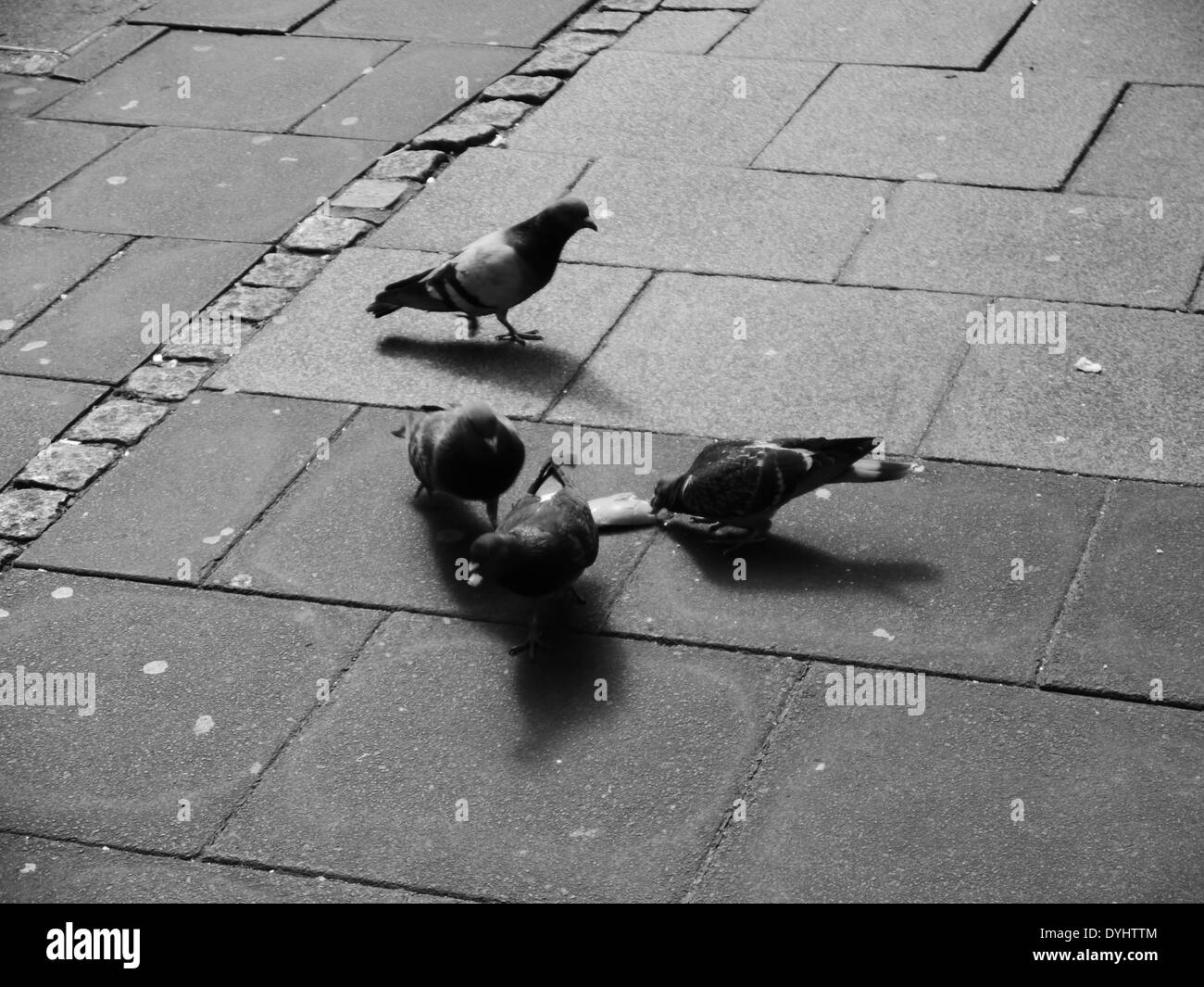 Abstract image of four pigeons scavenging for food on city street, Newcastle upon Tyne, England, UK. Monochrome - Stock Image